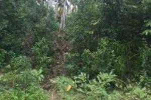 togean island jungle