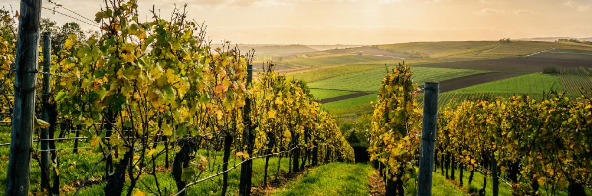Moravische Wijnroute